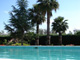 Swimming Pool and Washingtonia Robusta