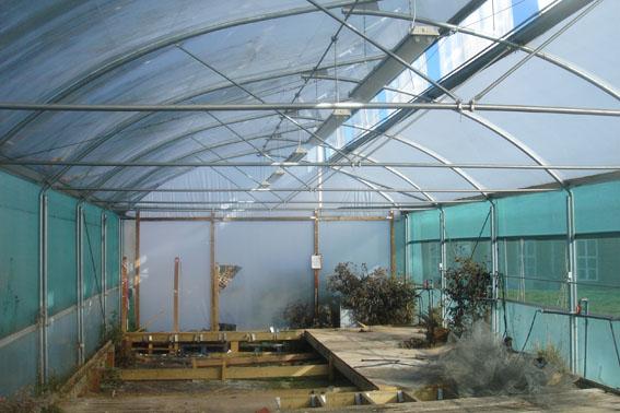 Galvanised Greenhouse Frame